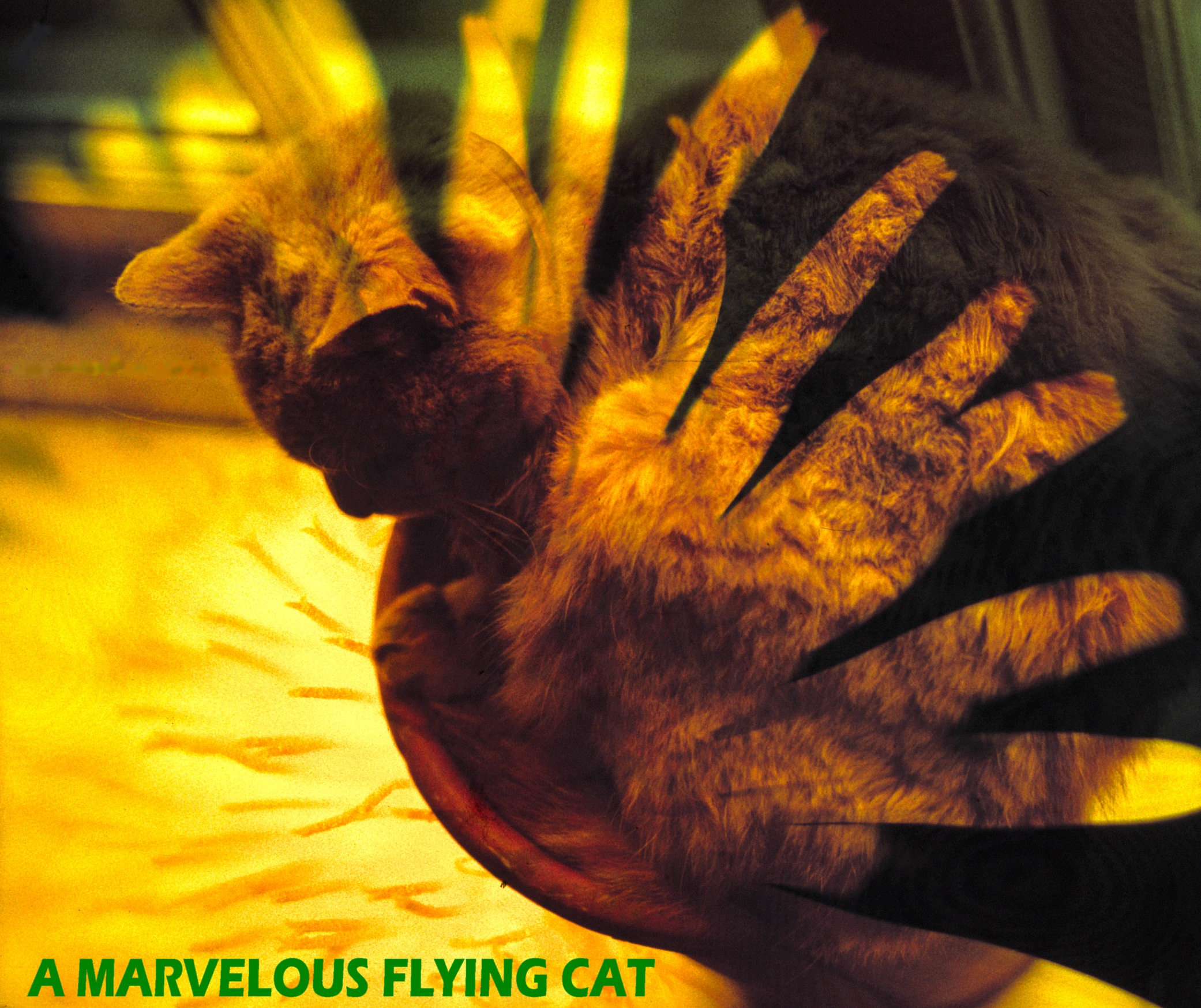 A Marvellous Flying Cat